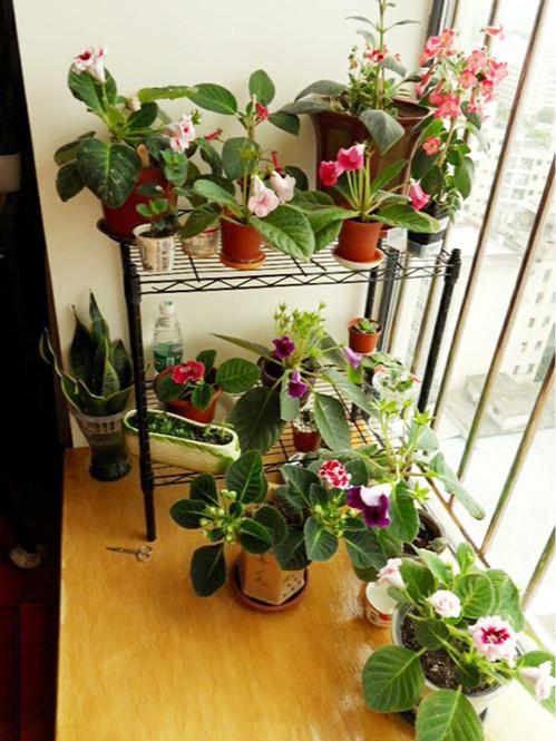 阳台窗台植物种植花草线网置物架