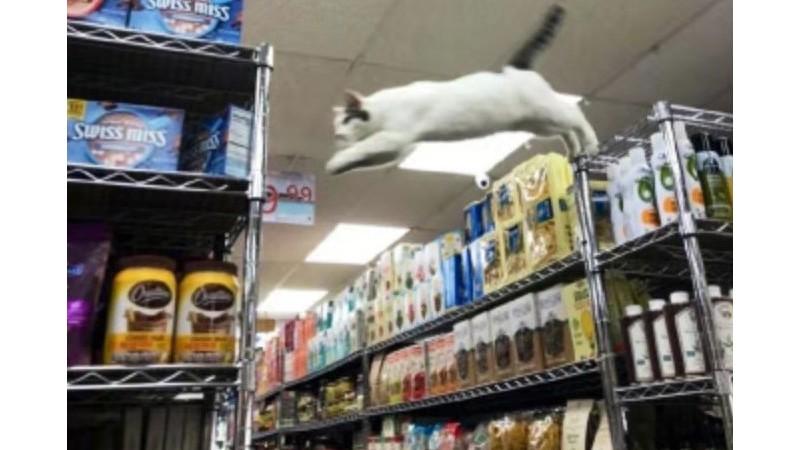一款连猫咪都爱的镀铬货架-种草贴