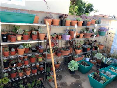 家居阳台花架花园盆栽架方案