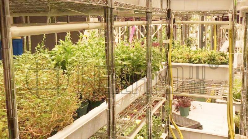 香港农场园艺场,花店,立体种植场,培植机构案例