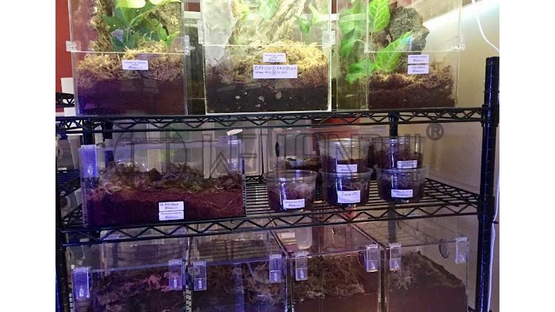 植物养殖架昆虫养殖金属线网架子