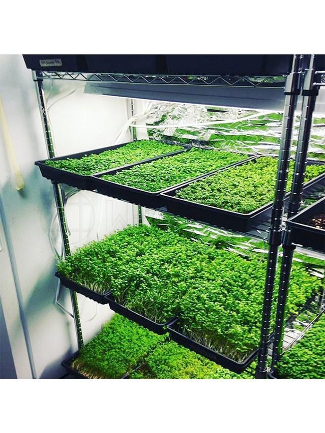 植物花卉豆芽发芽培育货架